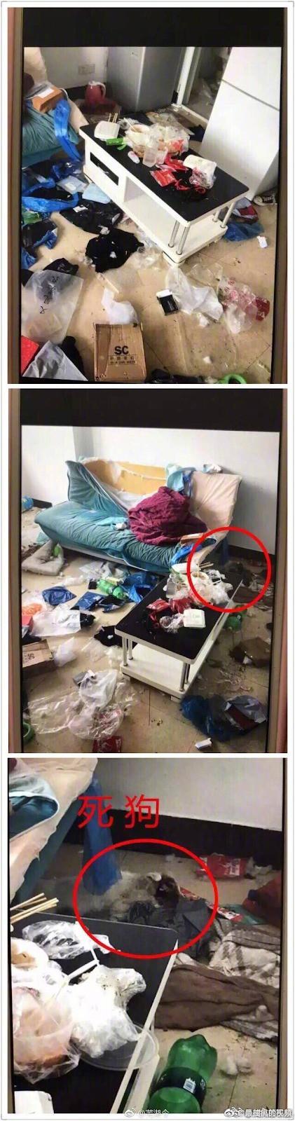 Cảnh tượng khủng khiếp: Thiếu nữ 20 tuổi thuê căn hộ và sống chung với rác cùng phân động vật khiến ai cũng rùng mình - Ảnh 4.