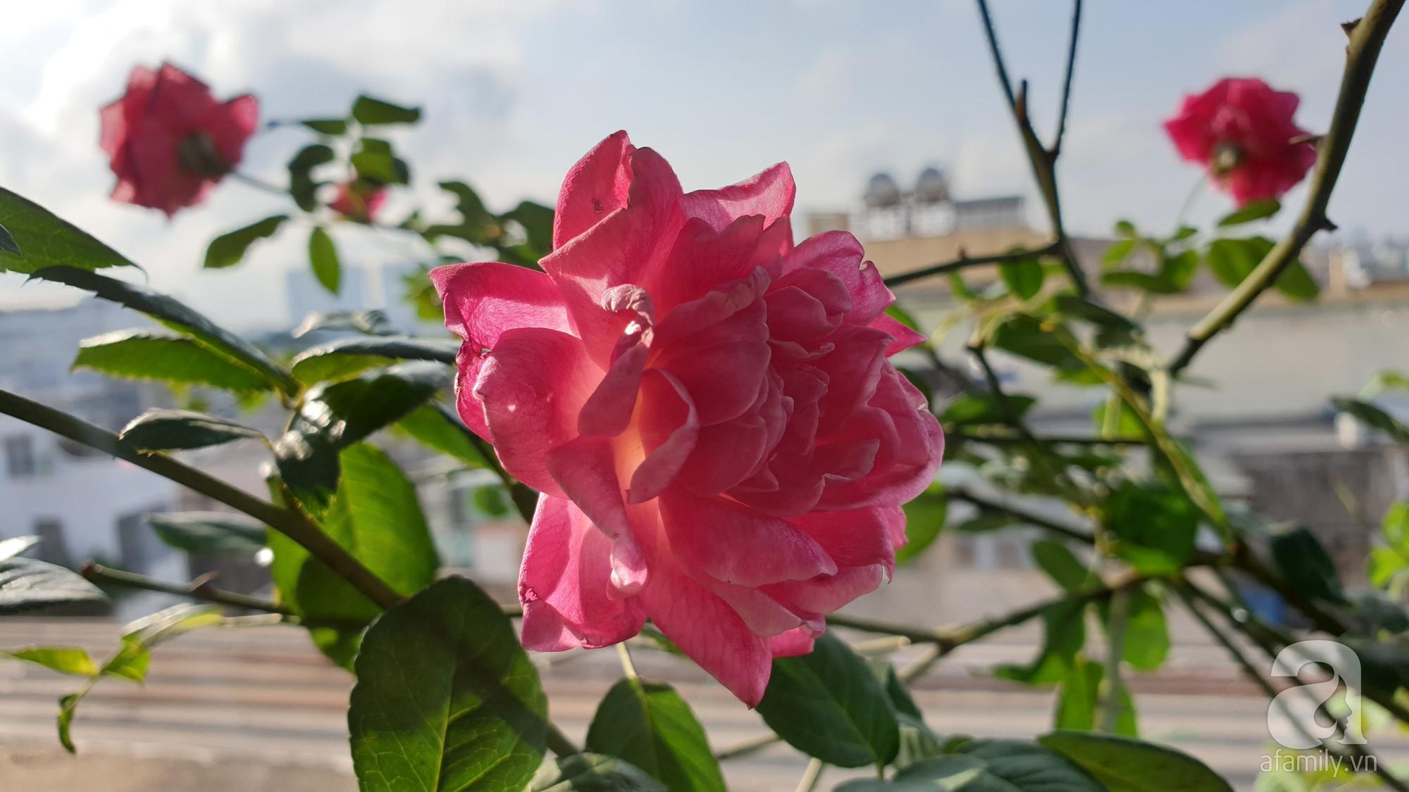 Vườn hồng trên sân thượng rực rỡ sắc màu của chàng trai 8x siêu đảm ở Sài Gòn - Ảnh 15.