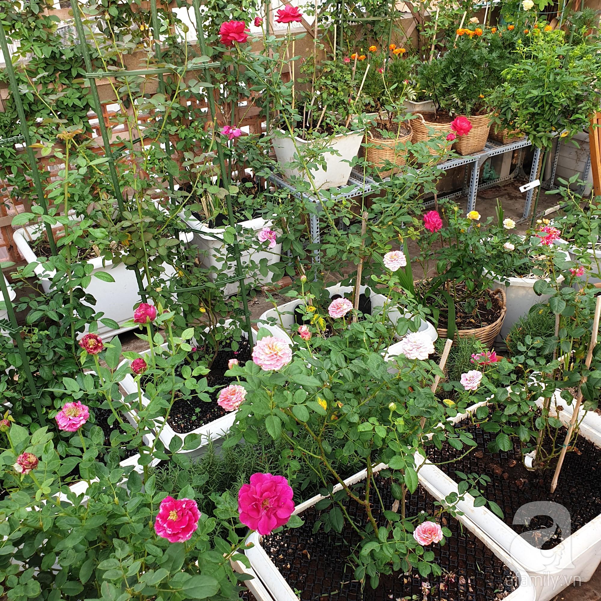 Vườn hồng trên sân thượng rực rỡ sắc màu của chàng trai 8x siêu đảm ở Sài Gòn - Ảnh 6.