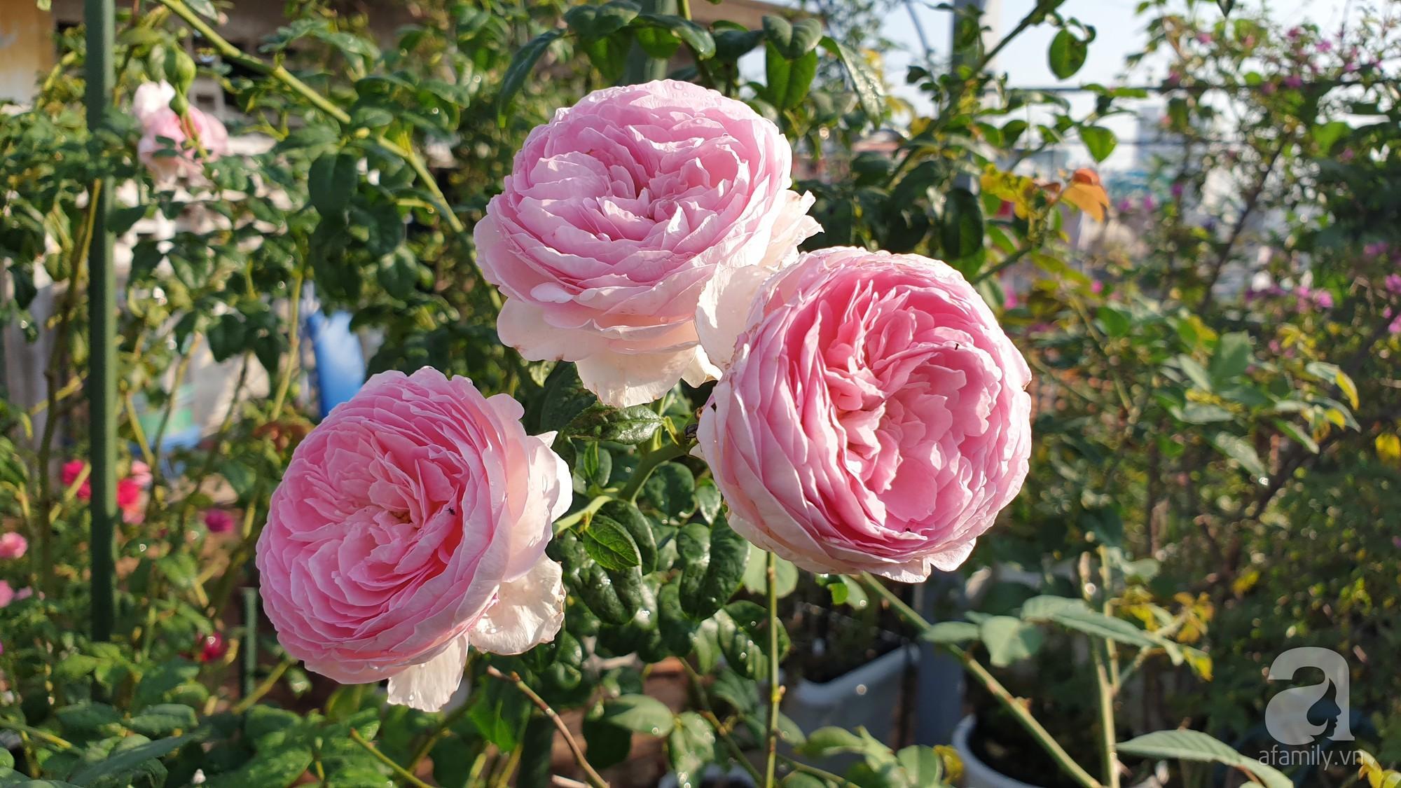 Vườn hồng trên sân thượng rực rỡ sắc màu của chàng trai 8x siêu đảm ở Sài Gòn - Ảnh 9.
