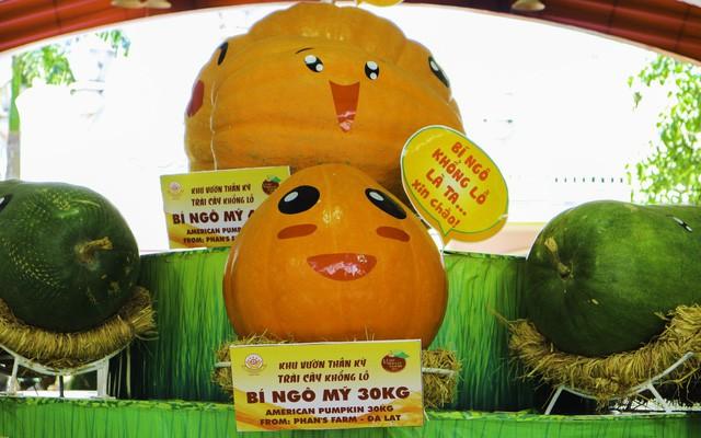 Lễ hội trái cây Nam Bộ lần thứ 15 với chuỗi hoạt động đậm đà văn hóa Nam Bộ - Ảnh 5.