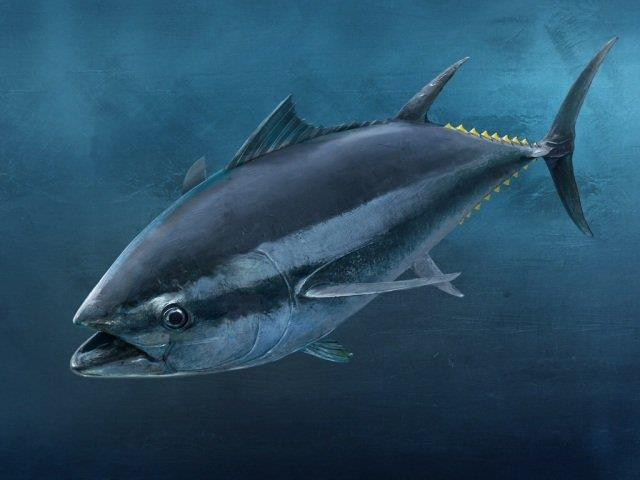 Collagen thủy phân từ vảy cá biển đã chính thức có mặt tại Việt Nam - Ảnh 2.