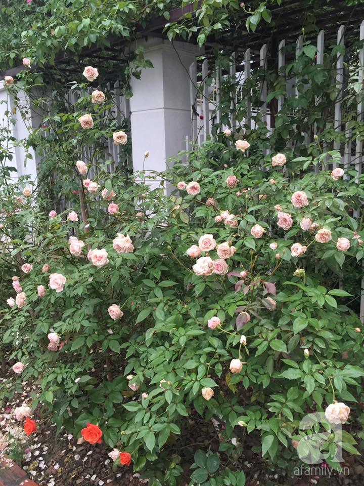 Cuộc sống bình yên của người đàn ông trong ngôi nhà phủ kín hoa hồng ở Hà Nội - Ảnh 15.