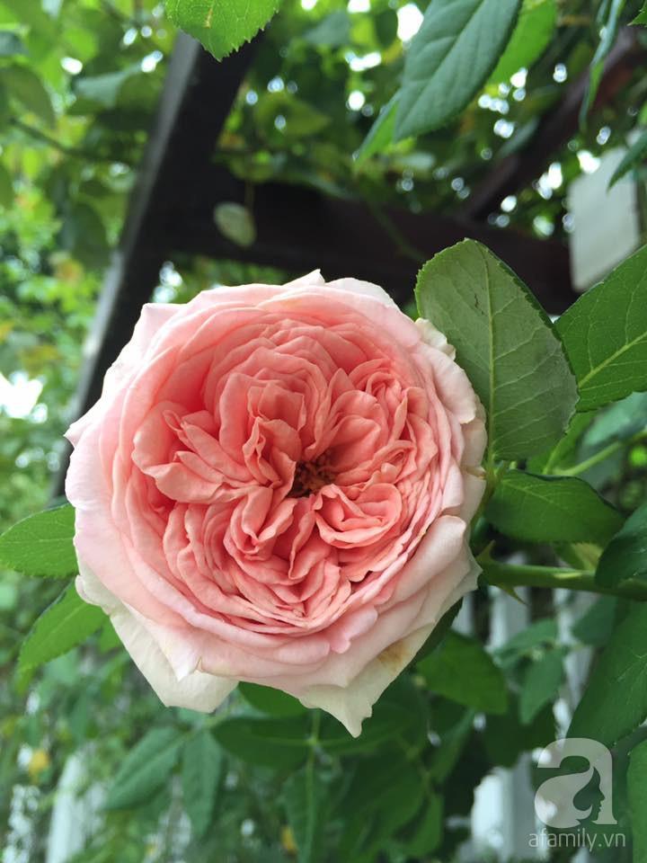 Cuộc sống bình yên của người đàn ông trong ngôi nhà phủ kín hoa hồng ở Hà Nội - Ảnh 14.