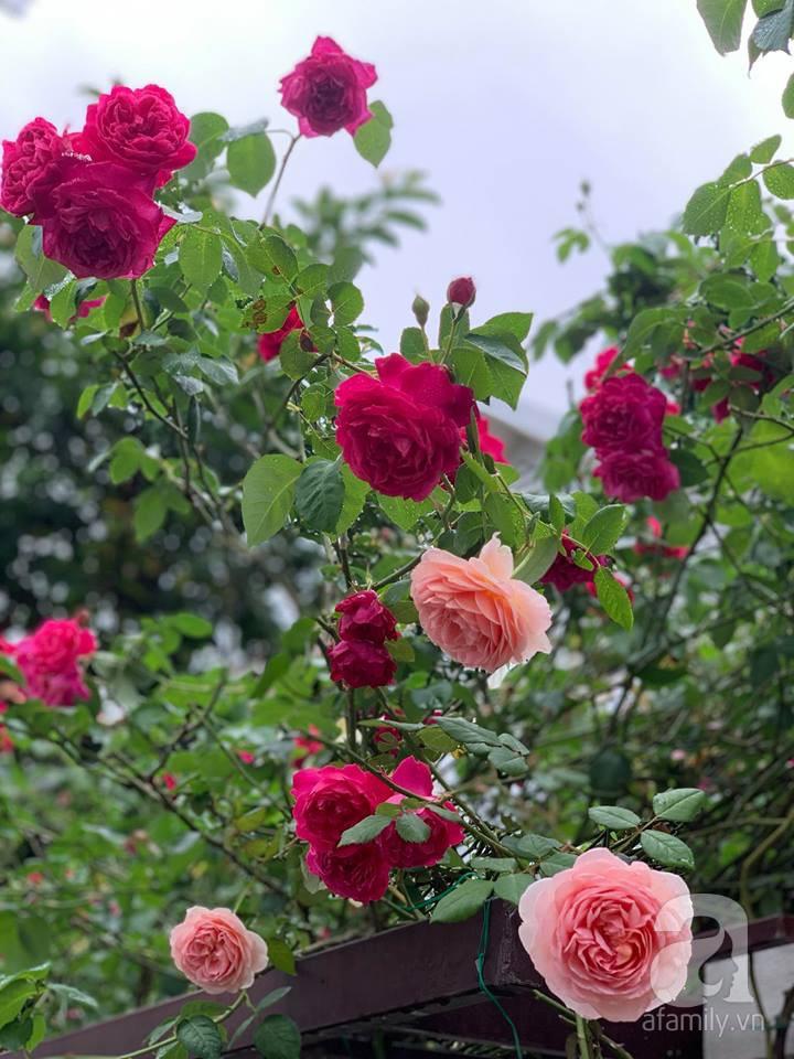Cuộc sống bình yên của người đàn ông trong ngôi nhà phủ kín hoa hồng ở Hà Nội - Ảnh 4.