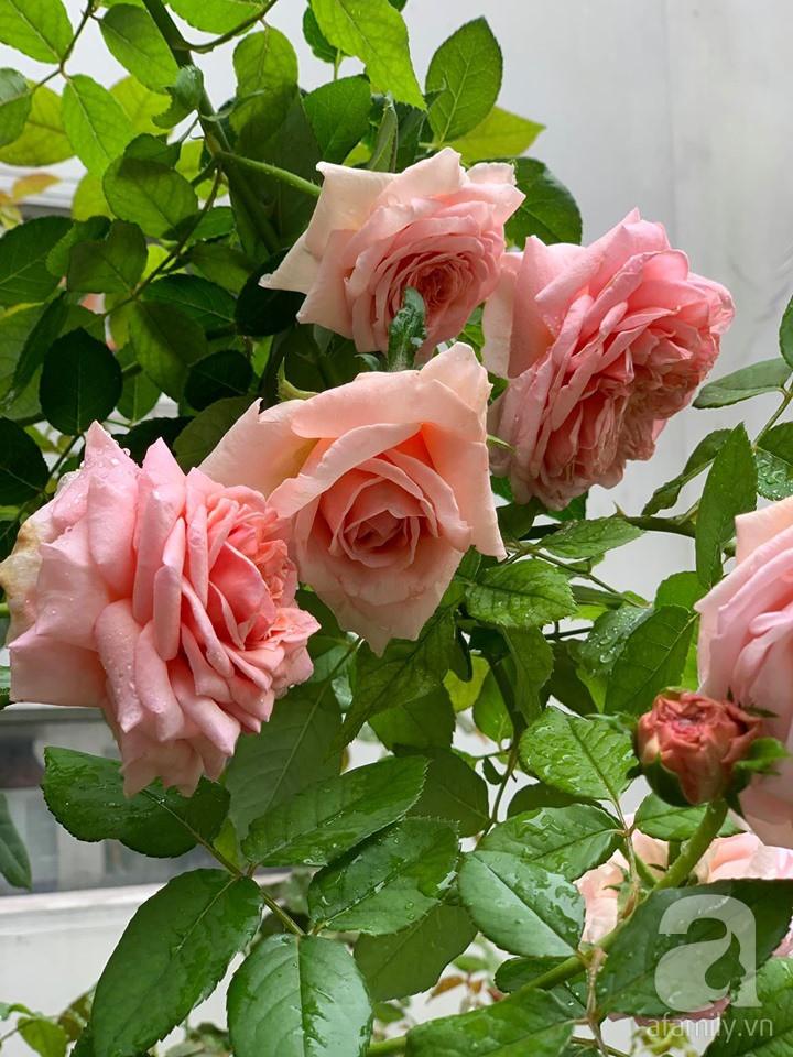 Cuộc sống bình yên của người đàn ông trong ngôi nhà phủ kín hoa hồng ở Hà Nội - Ảnh 8.