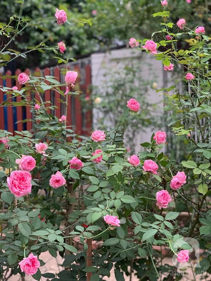 Cuộc sống bình yên của người đàn ông trong ngôi nhà phủ kín hoa hồng ở Hà Nội - Ảnh 7.