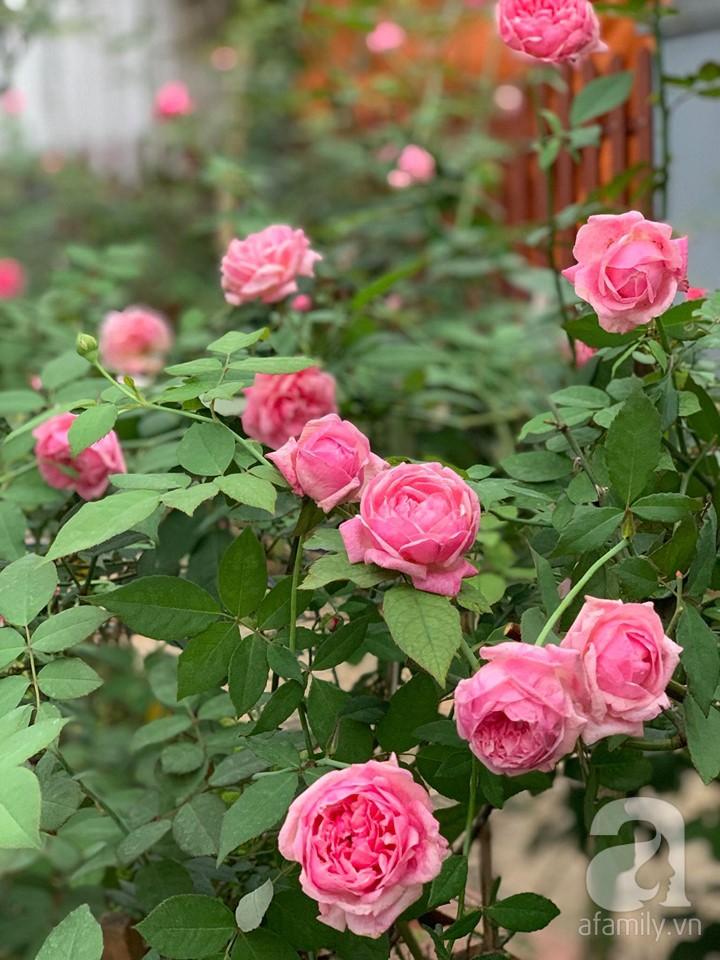 Cuộc sống bình yên của người đàn ông trong ngôi nhà phủ kín hoa hồng ở Hà Nội - Ảnh 3.