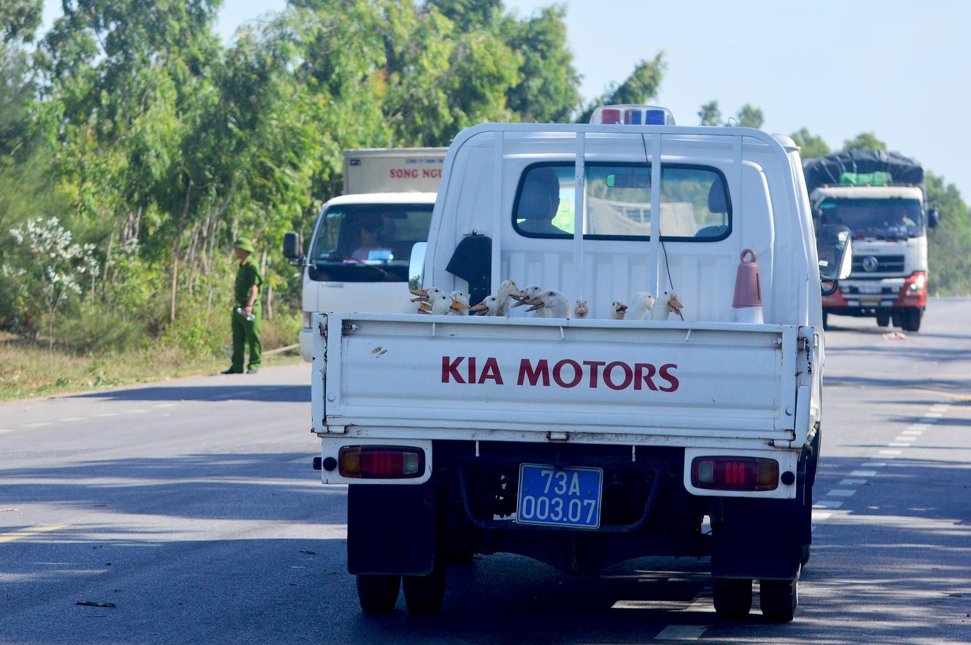 Xe tải gặp nạn, hàng trăm con vịt bị dân hôi của buộc công an xuống đường tìm vịt trả chủ xe  - Ảnh 7.