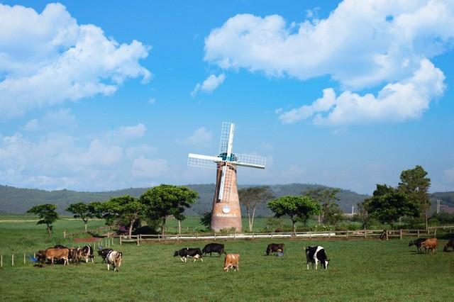 Cần 1 nơi để gia đình khám phá thiên nhiên: Hãy thử 1 ngày trải nghiệm ở trang trại bò sữa Vinamilk Organic Đà Lạt - Ảnh 4.