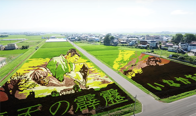 ricefield-3