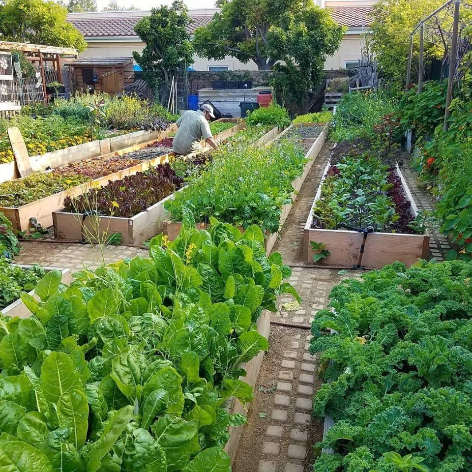Gia đình nhiều thế hệ chung sống hạnh phúc bên ngôi nhà yên bình cùng mảnh vườn trồng rau quả sạch rộng 4000m2 - Ảnh 8.
