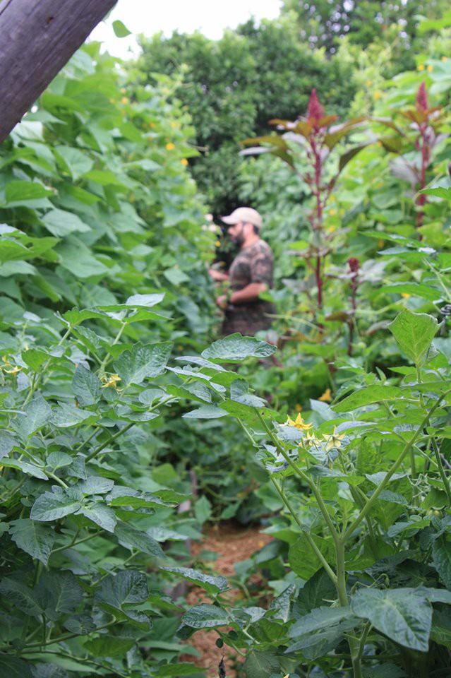 Gia đình nhiều thế hệ chung sống hạnh phúc bên ngôi nhà yên bình cùng mảnh vườn trồng rau quả sạch rộng 4000m2 - Ảnh 5.