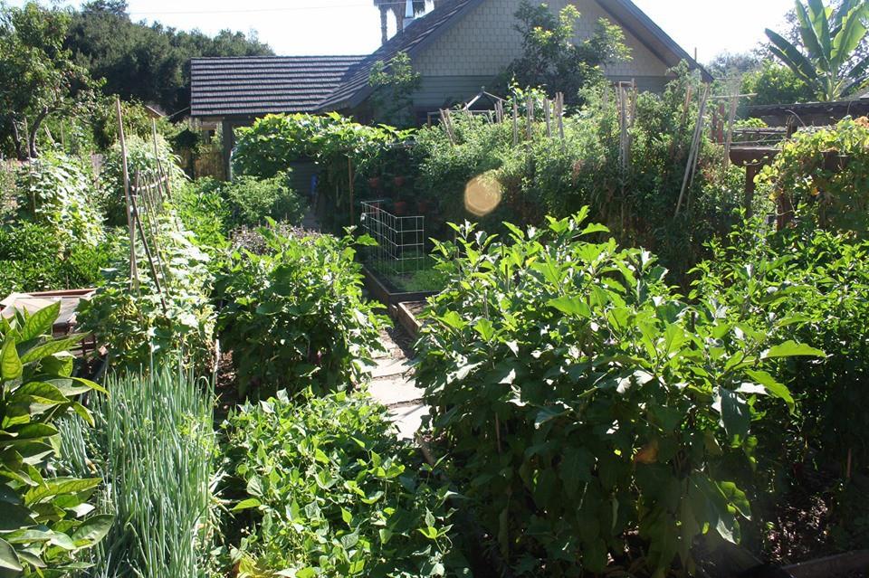 Gia đình nhiều thế hệ chung sống hạnh phúc bên ngôi nhà yên bình cùng mảnh vườn trồng rau quả sạch rộng 4000m2 - Ảnh 17.