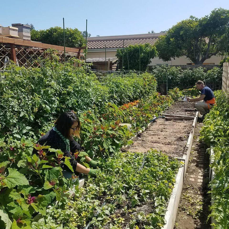 Gia đình nhiều thế hệ chung sống hạnh phúc bên ngôi nhà yên bình cùng mảnh vườn trồng rau quả sạch rộng 4000m2 - Ảnh 16.