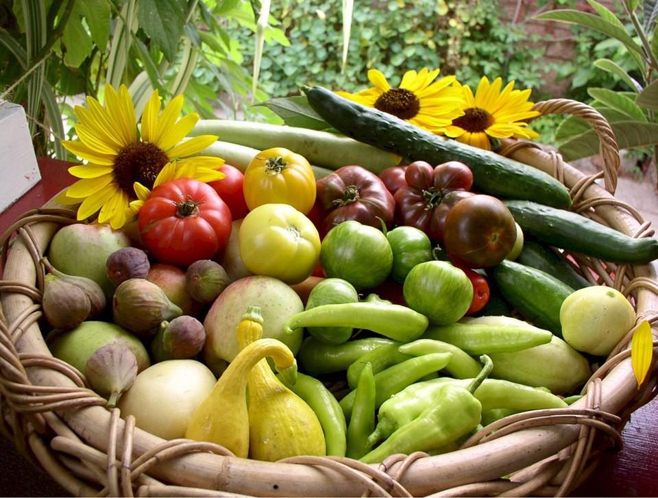Gia đình nhiều thế hệ chung sống hạnh phúc bên ngôi nhà yên bình cùng mảnh vườn trồng rau quả sạch rộng 4000m2 - Ảnh 13.
