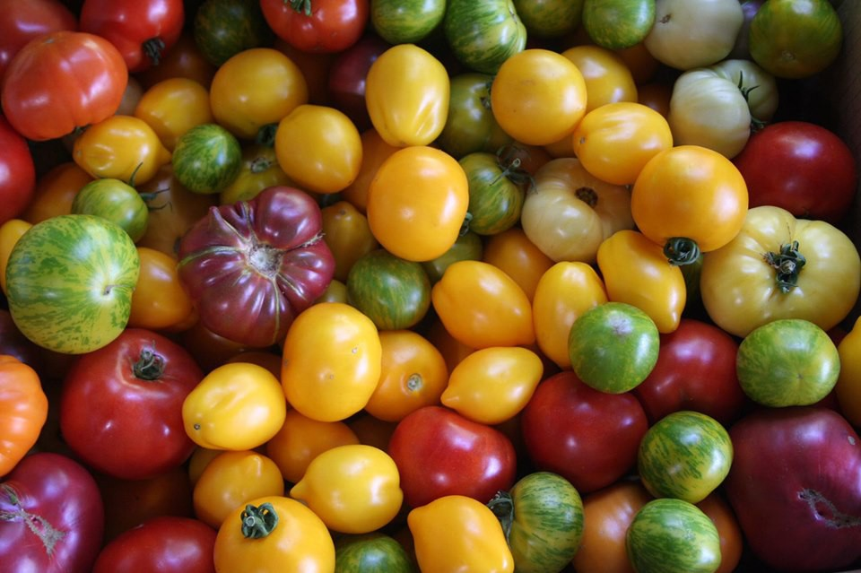 Gia đình nhiều thế hệ chung sống hạnh phúc bên ngôi nhà yên bình cùng mảnh vườn trồng rau quả sạch rộng 4000m2 - Ảnh 12.
