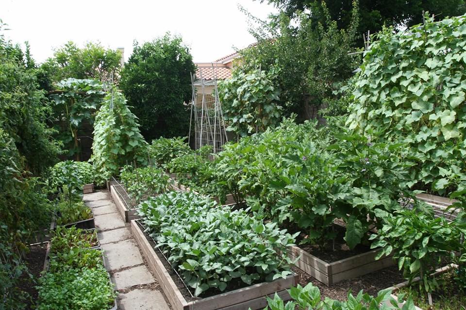 Gia đình nhiều thế hệ chung sống hạnh phúc bên ngôi nhà yên bình cùng mảnh vườn trồng rau quả sạch rộng 4000m2 - Ảnh 11.