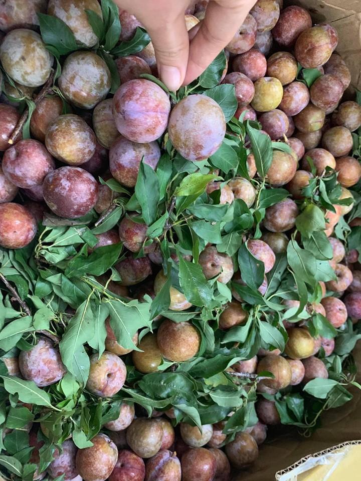 Học ngay Hot Facebooker Tô Hưng Giang cách mua mận ngon thơm dày cùi cực chuẩn dâng lễ ngày Tết Đoan Ngọ - Ảnh 3.