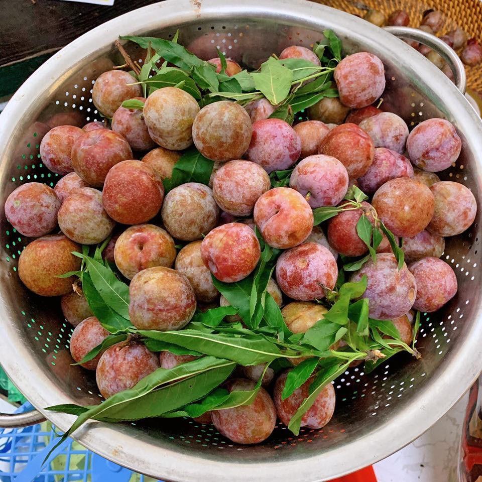Học ngay Hot Facebooker Tô Hưng Giang cách mua mận ngon thơm dày cùi cực chuẩn dâng lễ ngày Tết Đoan Ngọ - Ảnh 7.