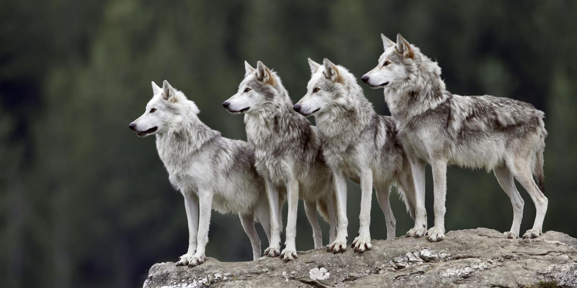 Muốn hoàn thiện bản thân mình hơn, hội chị em công sở cần áp dụng ngay 5 bài học quý báu từ động vật - Ảnh 9.