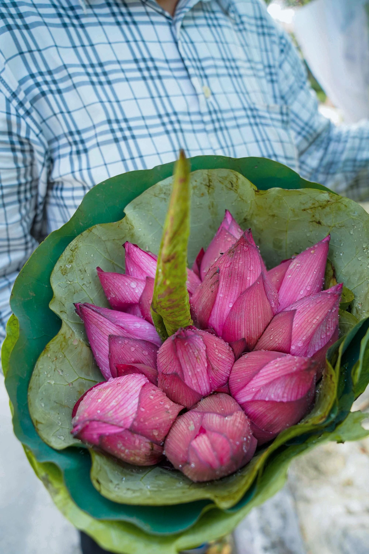 Một mùa sen nữa lại về, Hà Nội lại nhuộm hồng cánh hoa, tươi như thanh xuân của gái chưa chồng - Ảnh 16.