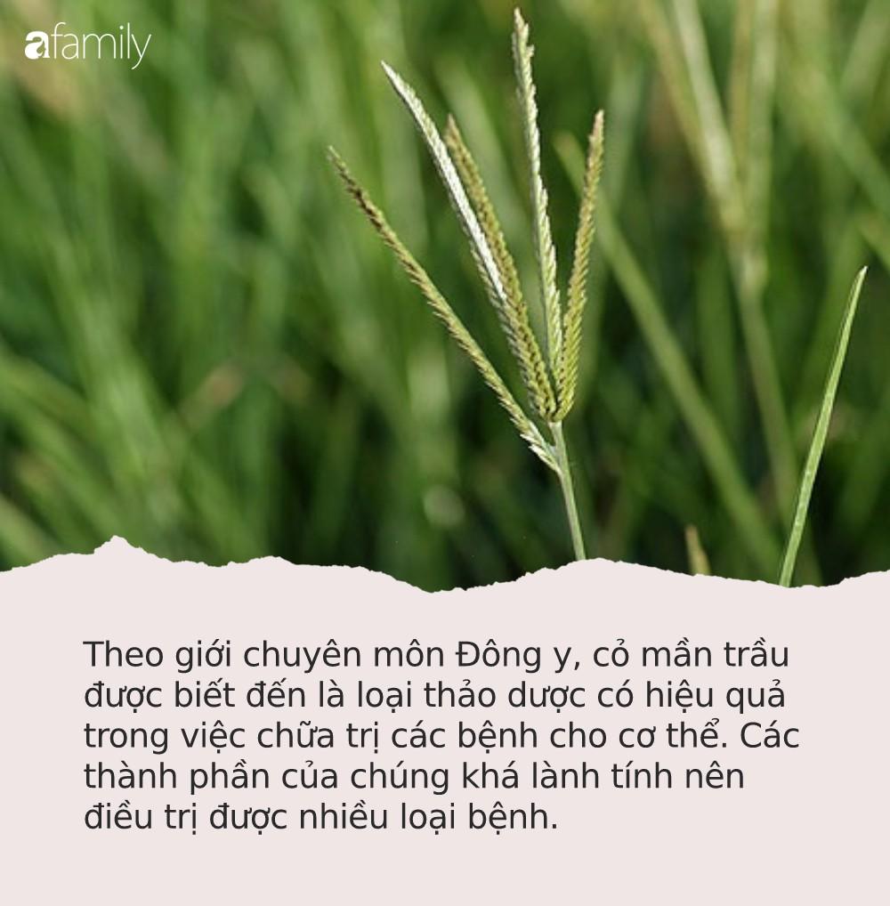 Loại cỏ dại ở Việt Nam chuyên cho bò ăn, sang Trung Quốc lại có giá: Nghe chuyên gia liệt kê tác dụng ai cũng tiếc hùi hụi - Ảnh 2.