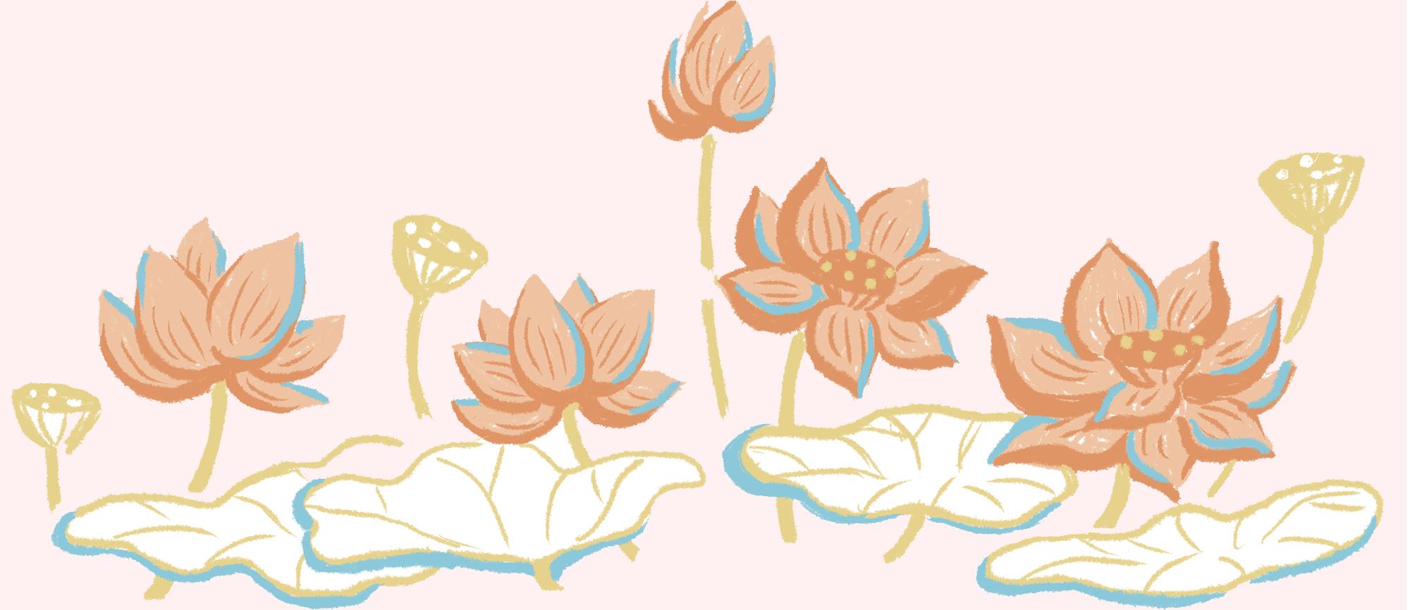 Có hình ảnh nào đặc biệt như hoa sen: Tột cùng dung dị, tột cùng thanh cao - Ảnh 13.