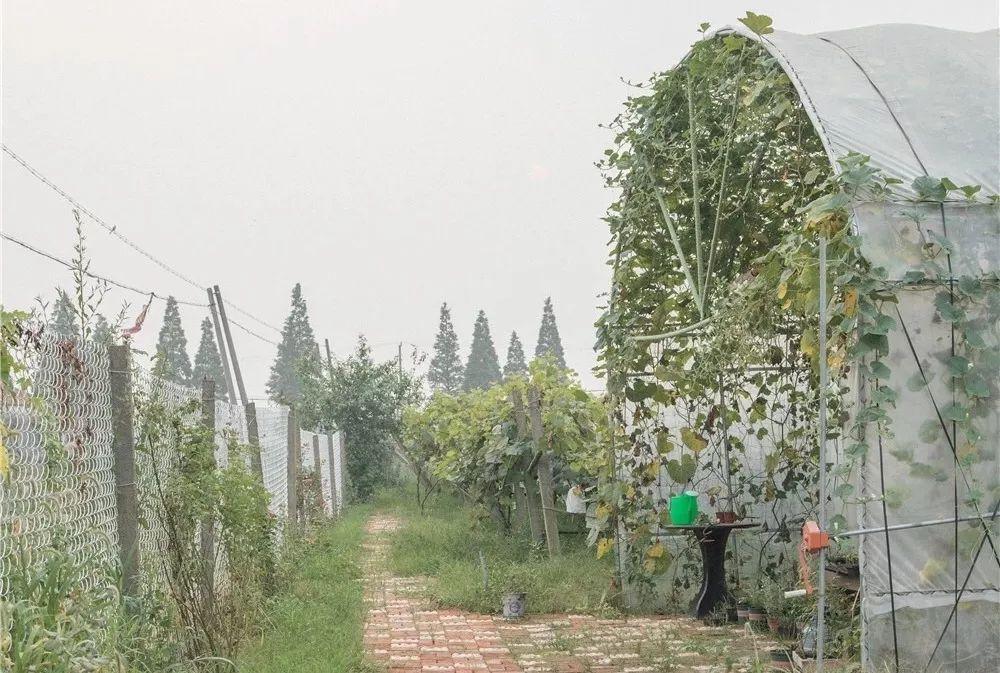 Mạnh mẽ đưa ra quyết định bỏ phố về quê, cô gái 9x đã đem lại những ngày thảnh thơi cho cha mẹ bên khu vườn rộng 6000m² - Ảnh 38.