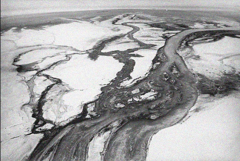 Minamata - căn bệnh từ thảm họa ngộ độc thủy ngân vô tiền khoáng hậu trên thế giới - Ảnh 4.