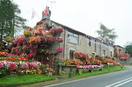1208221345603127nhahoa2 Ngắm ngôi nhà thiết kế hoa tươi rói suốt 26 năm