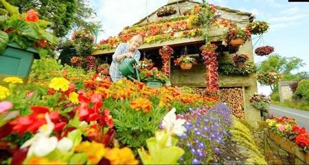 1208221345603127nhahoa3 Ngắm ngôi nhà thiết kế hoa tươi rói suốt 26 năm