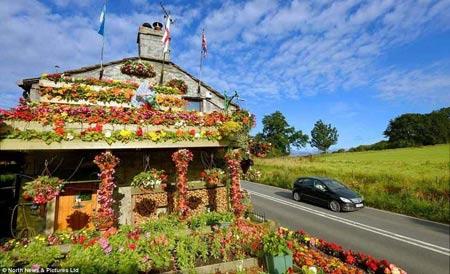 1208221345603127nhahoa7 Ngắm ngôi nhà thiết kế hoa tươi rói suốt 26 năm
