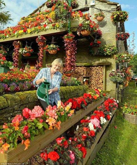 1208221345603127nhahoa8 Ngắm ngôi nhà thiết kế hoa tươi rói suốt 26 năm