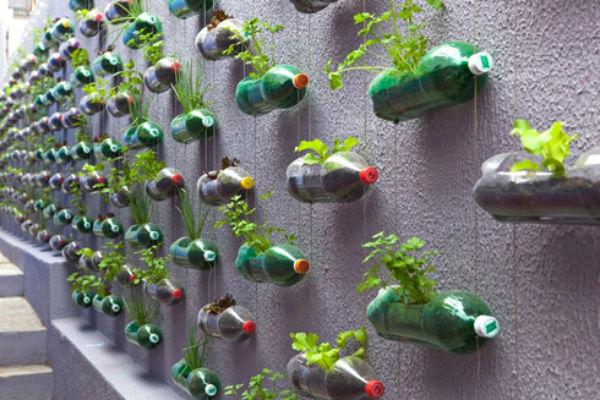 17082012rau2 27933 thiết kế vườn rau đẹp xinh trong nhà phố
