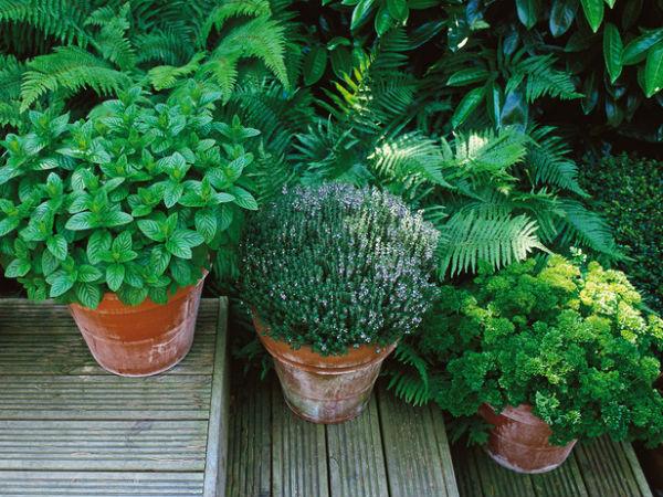 trong rau trong vuon1 6a8ea thiết kế vườn rau đẹp xinh trong nhà phố