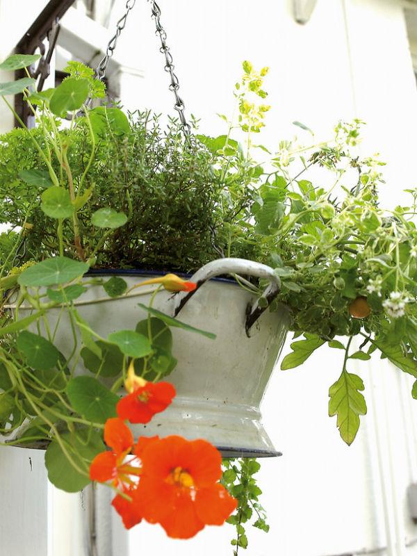 trong rau trong vuon2 6a8ea thiết kế vườn rau đẹp xinh trong nhà phố