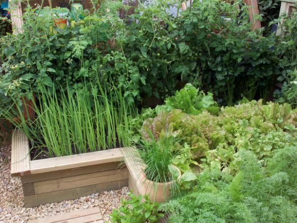 trong rau trong vuon3 6a8ea thiết kế vườn rau đẹp xinh trong nhà phố