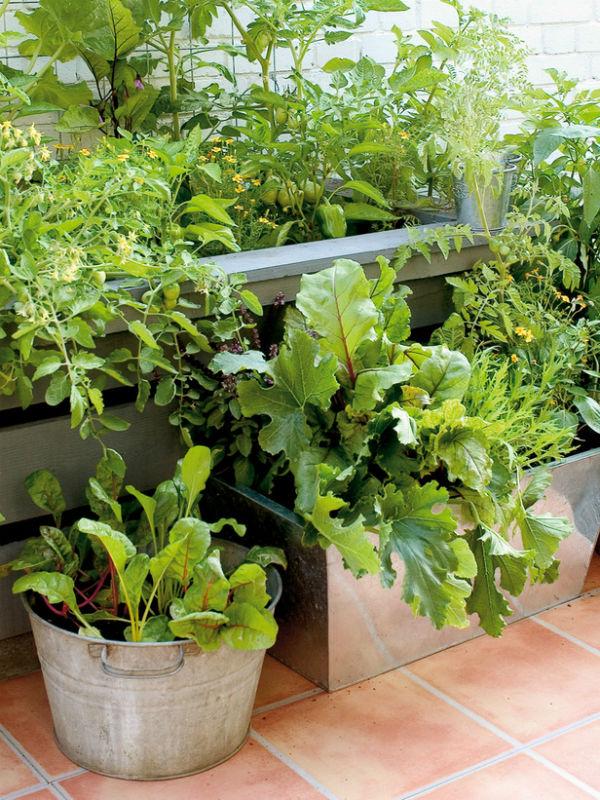 trong rau trong vuon4 6a8ea thiết kế vườn rau đẹp xinh trong nhà phố