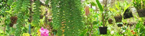 """Ngắm vườn treo - """"giải pháp xanh"""" cho nhà thành phố"""