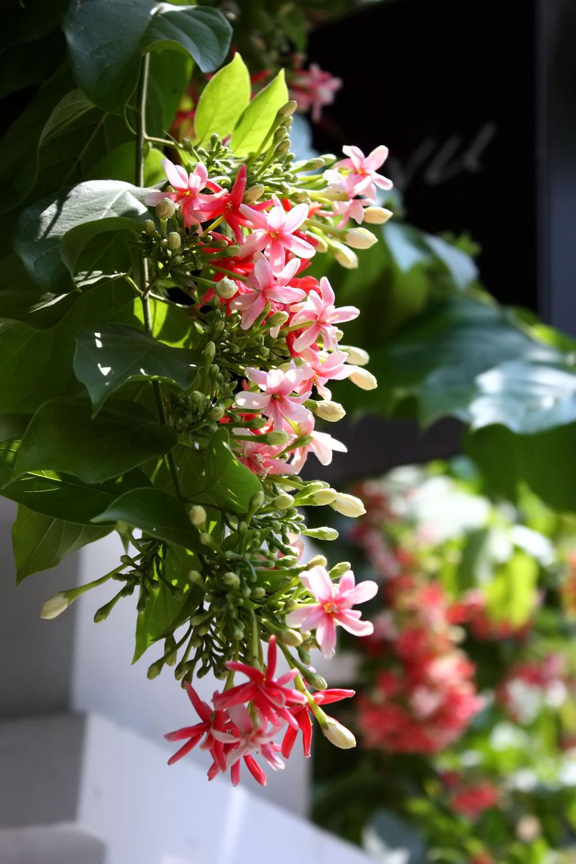 14 loại hoa tuyệt đẹp thích hợp trồng để khoe hương sắc ...  14 loại hoa t...