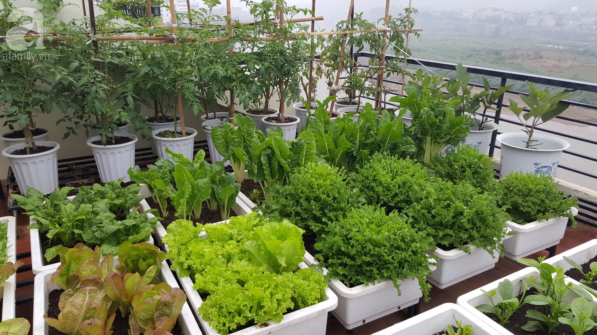 trồng rau sạch trên ban công chung cư bằng thùng xốp