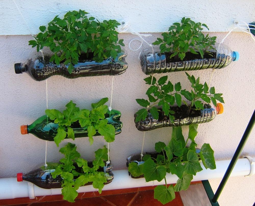trồng rau sạch trên ban công chung cư bằng chai nhựa