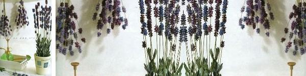Trang trí nhà phong cách đồng nội với hoa oải hương tự chế
