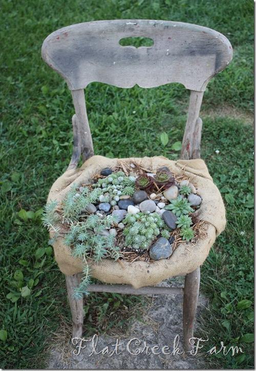 chair4thumb12 c5021 5 ý tưởng hô biến ghế cũ thành khu vườn mini