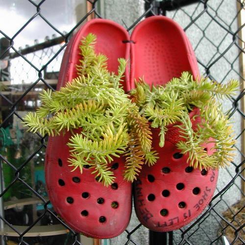shoescontainergarden13 cc75e Có tới 1001 cách tận dụng giày cũ để trồng hoa trong vườn