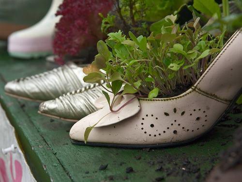 shoescontainergarden32 4fcf9 Có tới 1001 cách tận dụng giày cũ để trồng hoa trong vườn