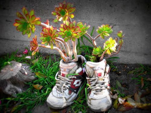 shoescontainergarden42 bb6c9 Có tới 1001 cách tận dụng giày cũ để trồng hoa trong vườn