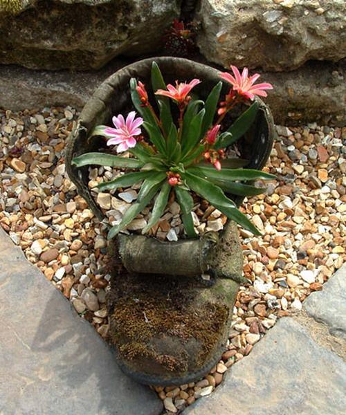 shoescontainergarden54 897c3 Có tới 1001 cách tận dụng giày cũ để trồng hoa trong vườn