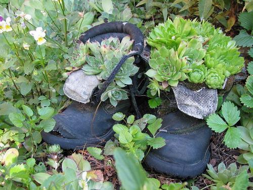 shoescontainergarden57 21483 Có tới 1001 cách tận dụng giày cũ để trồng hoa trong vườn